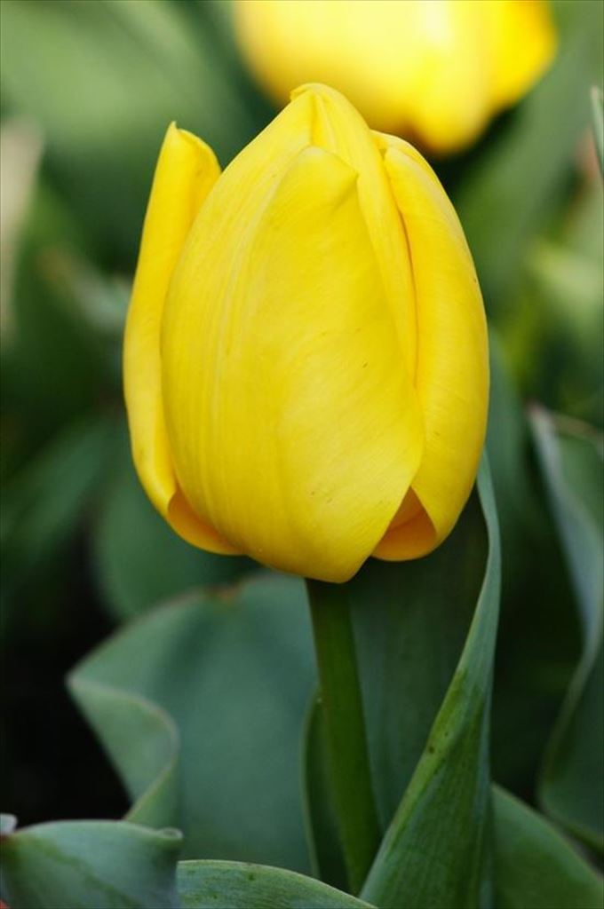 美しい花と花言葉 19
