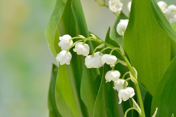 美しい花と花言葉 2.1