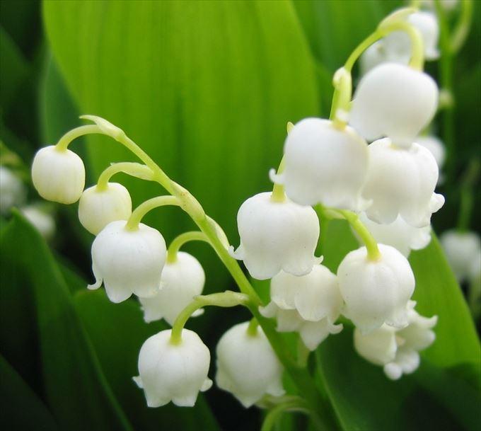 美しい花と花言葉 2