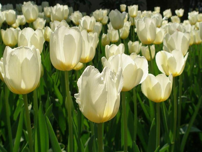 美しい花と花言葉 20