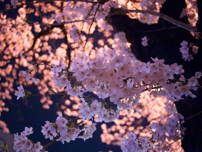 美しい花と花言葉 22
