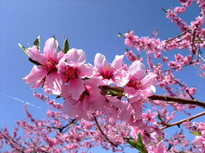 美しい花と花言葉 23