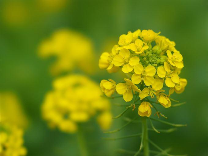 美しい花と花言葉 24