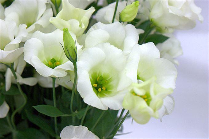美しい花と花言葉 25