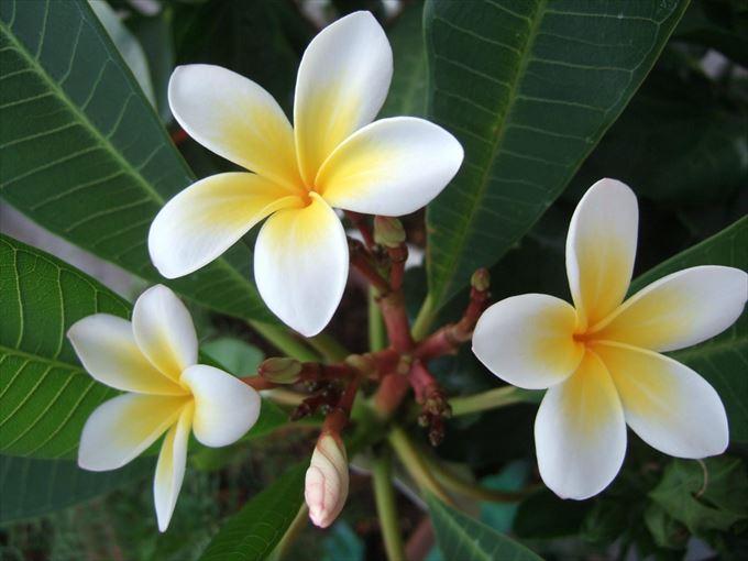 美しい花と花言葉 26.1