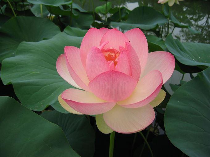 美しい花と花言葉 27 (2)