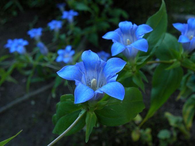 美しい花と花言葉 28