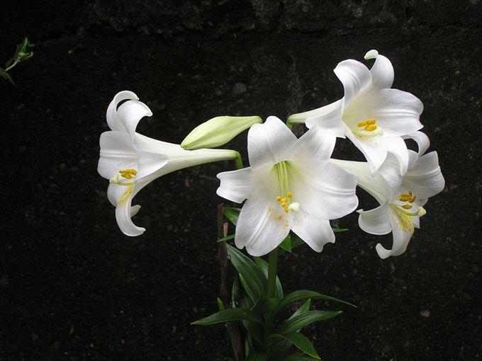 美しい花と花言葉 3