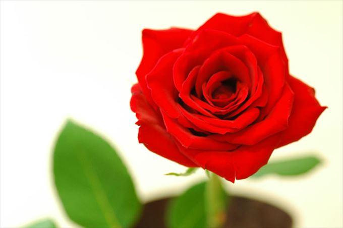 美しい花と花言葉 30