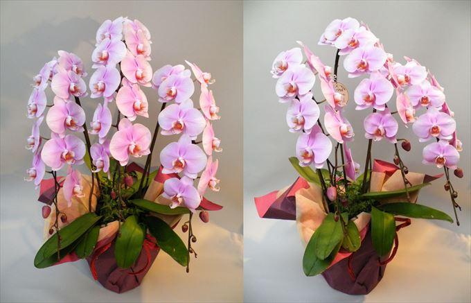 美しい花と花言葉 4.5