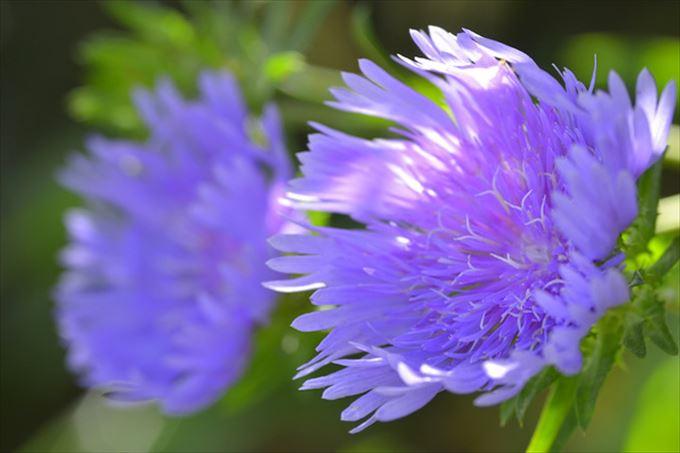 美しい花と花言葉 6