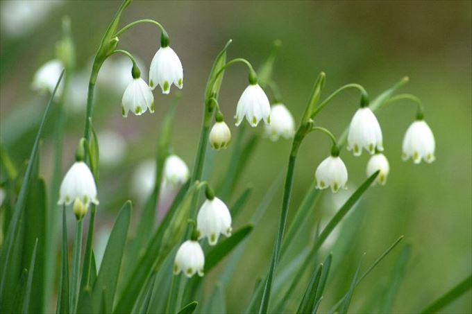 美しい花と花言葉 7