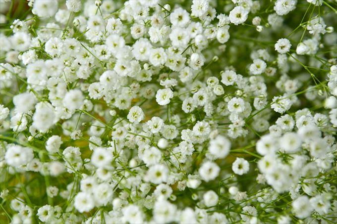 美しい花と花言葉 8