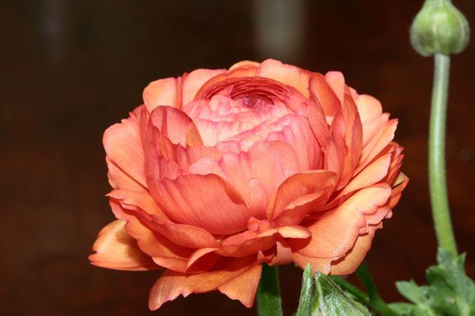 美しい花と花言葉 9