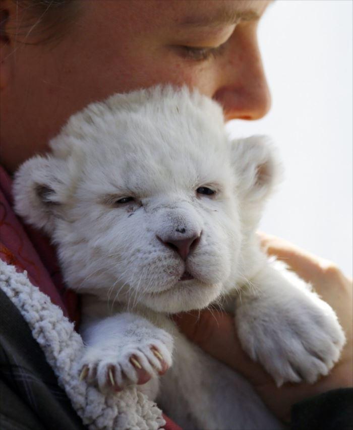 可愛い動物 2.1