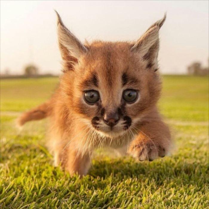 可愛い動物 6.1