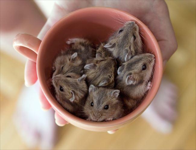 小動物画像p 12