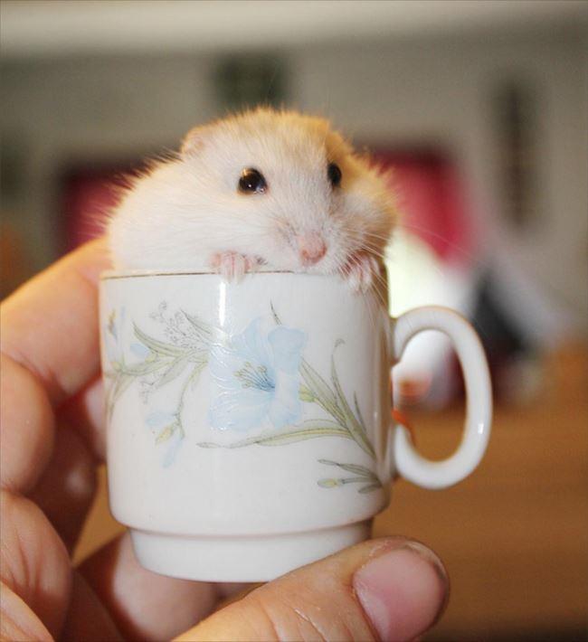 小動物画像p 14