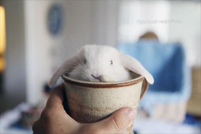 小動物画像p 2