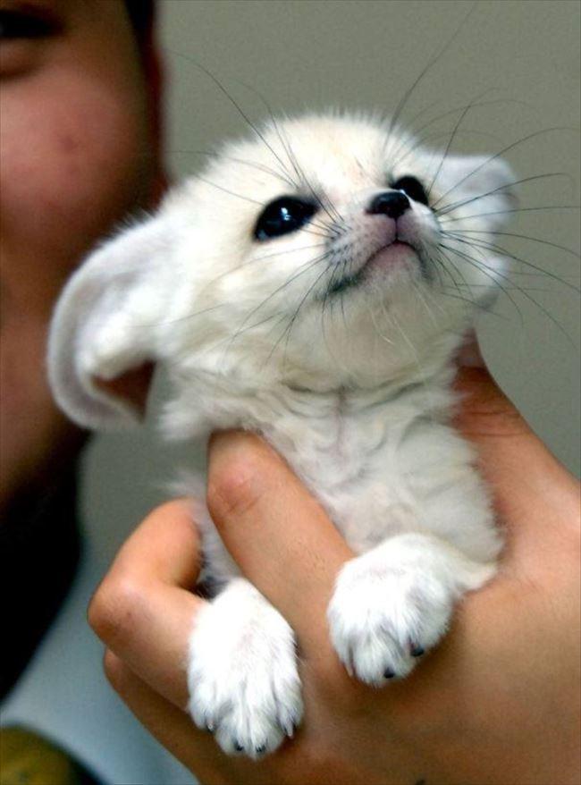小動物画像p 4