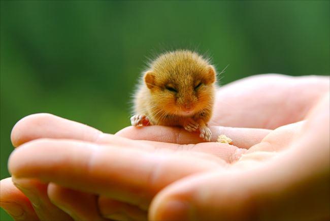 小動物画像p 40