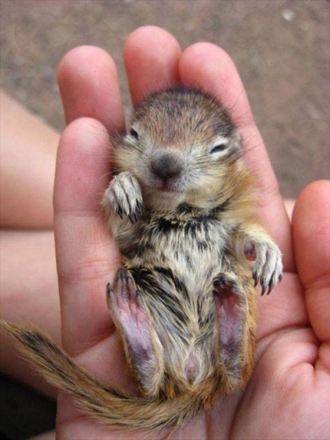 小動物画像p 41