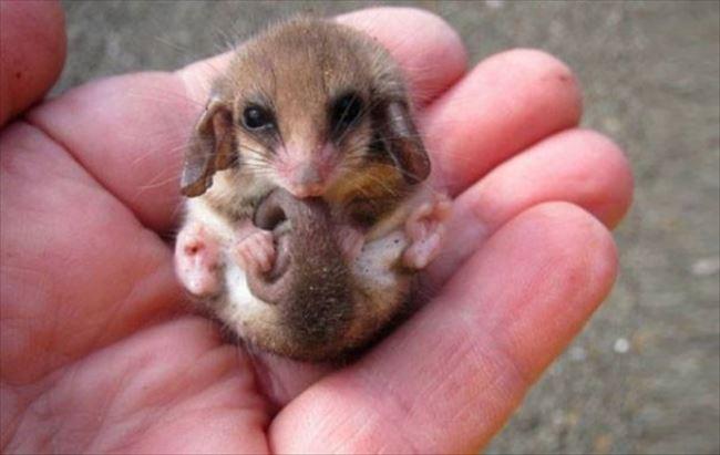 小動物画像p 42