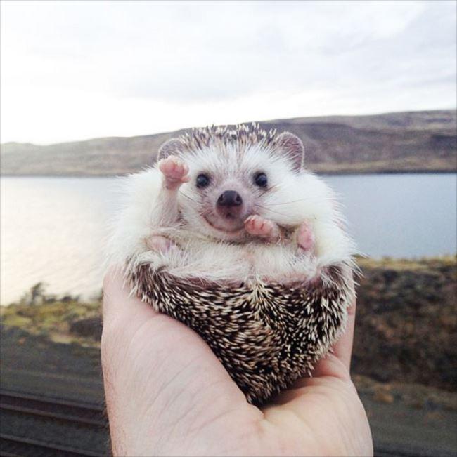 小動物画像p 44