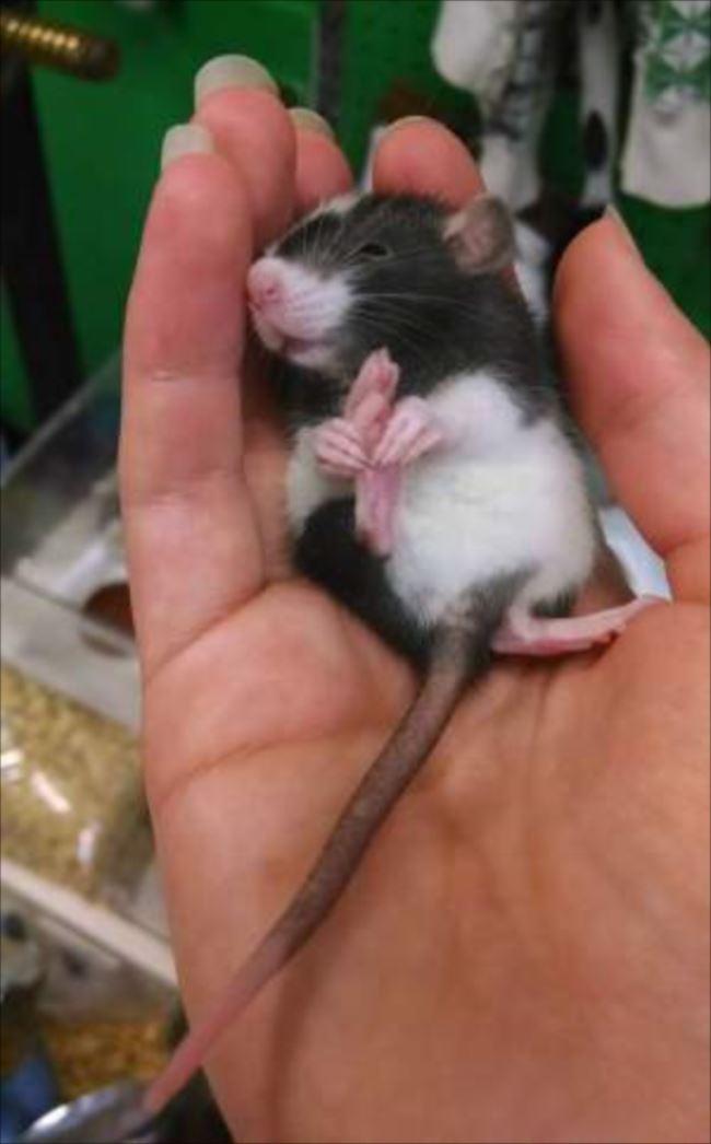 小動物画像p 49