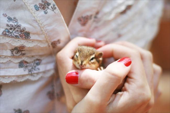 小動物画像p 56
