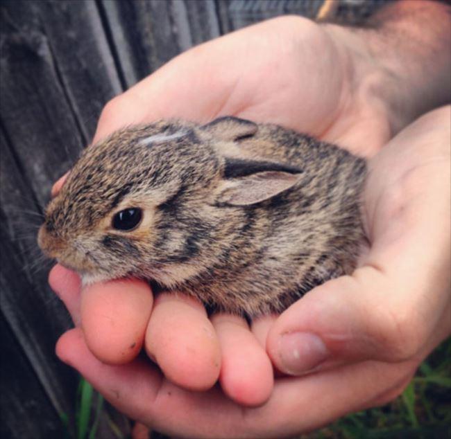 小動物画像p 60