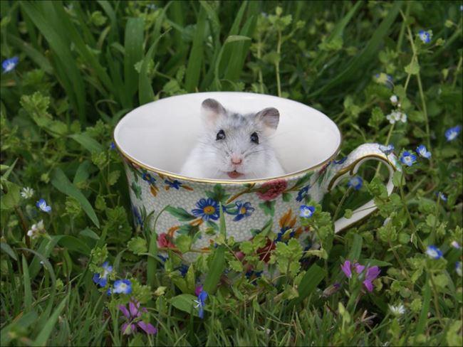 小動物画像p 7