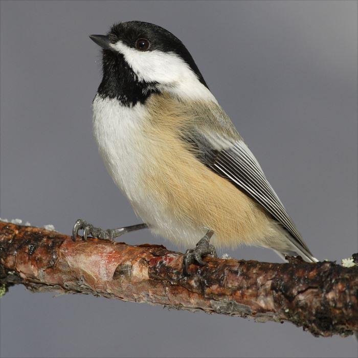 かわいい鳥 1