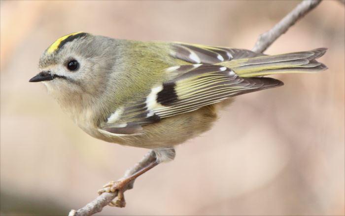 かわいい鳥 10.0