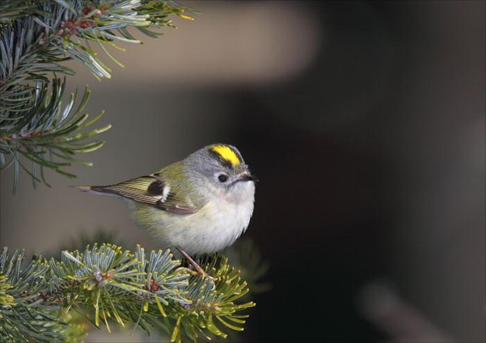 かわいい鳥 10.1