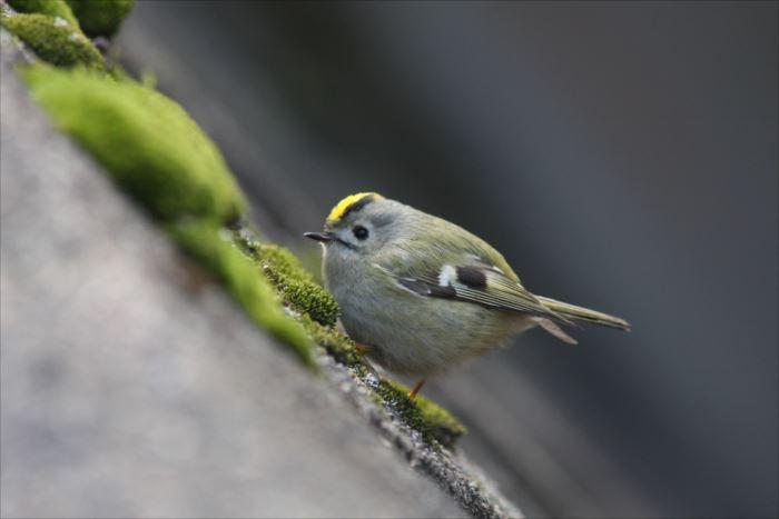 かわいい鳥 10.2