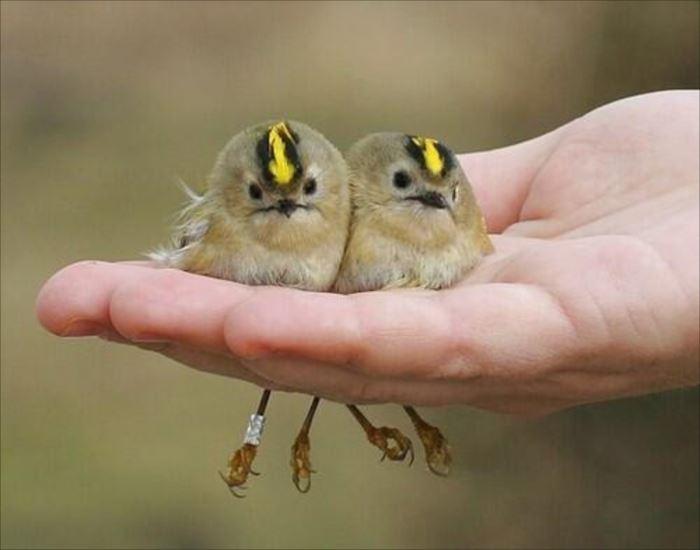 かわいい鳥 10.3