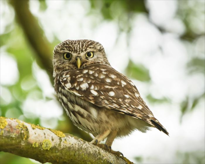 かわいい鳥 13.1