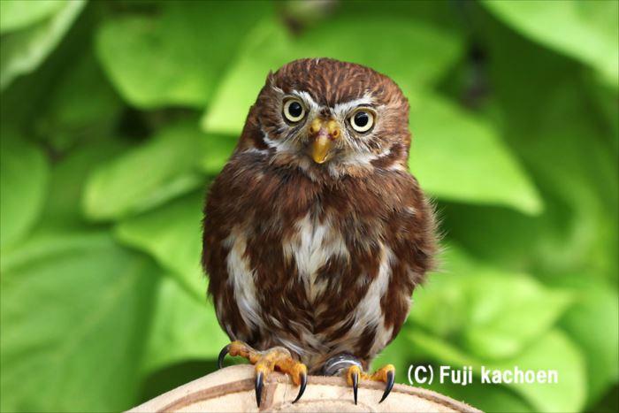 かわいい鳥 14.0