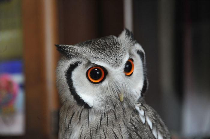 かわいい鳥 17.1