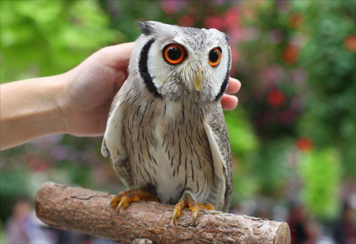 かわいい鳥 17.2