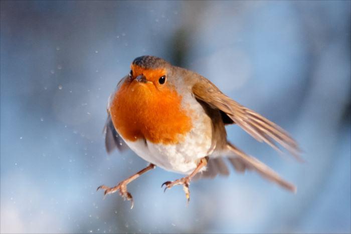 かわいい鳥 19.1