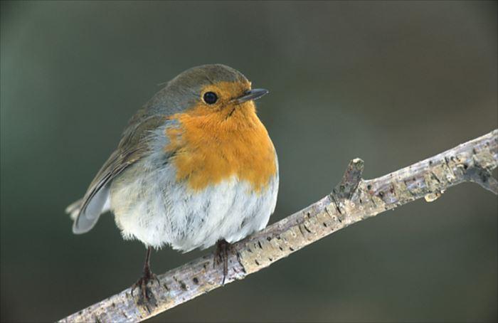 かわいい鳥 19.2