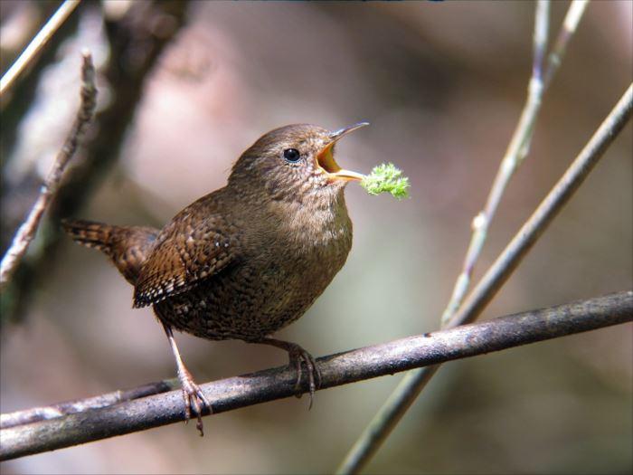 かわいい鳥 2.1
