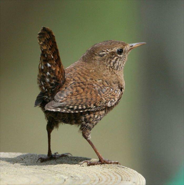 かわいい鳥 2.2