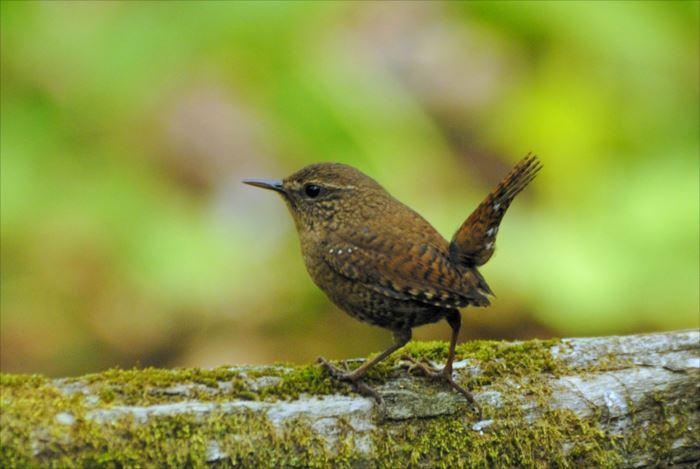 かわいい鳥 2