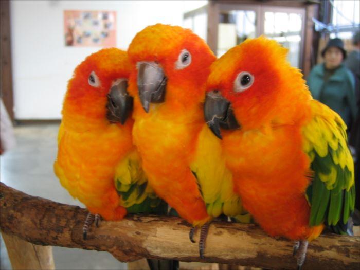 かわいい鳥 23.1