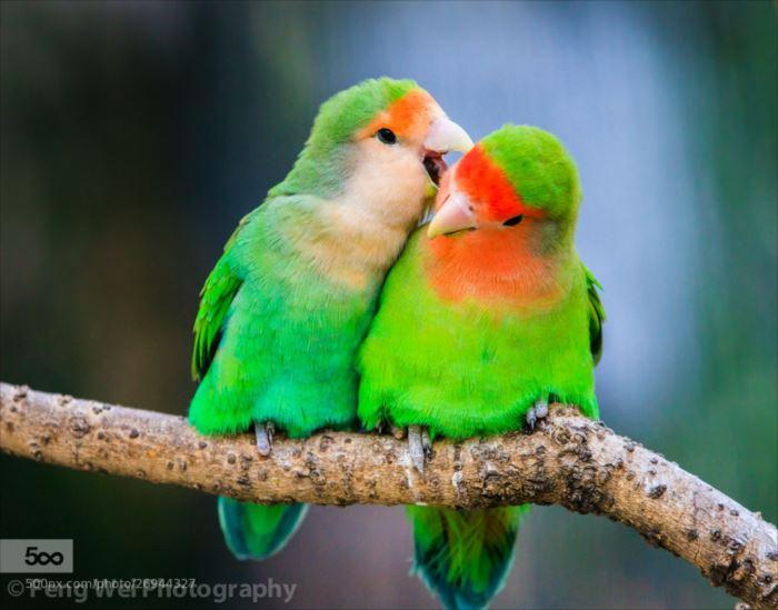 かわいい鳥 24.0