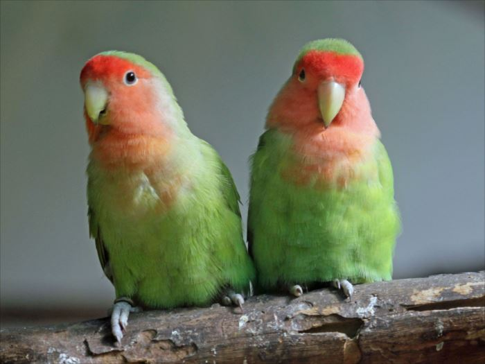 かわいい鳥 24.1