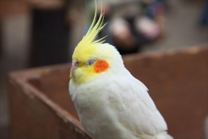 かわいい鳥 26.1